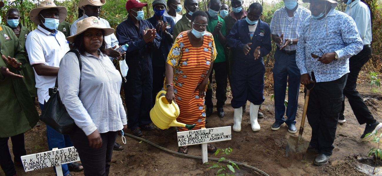 ADC Board Vice Chair - Tree Planting (ADC Kiswani Complex)